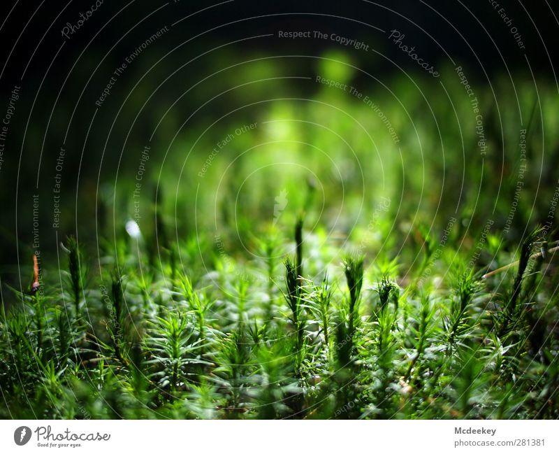 Miniaturwald für Ameisen Umwelt Natur Landschaft Pflanze Sonne Sommer Schönes Wetter Gras Moos Grünpflanze Wald authentisch natürlich weich grün schwarz weiß