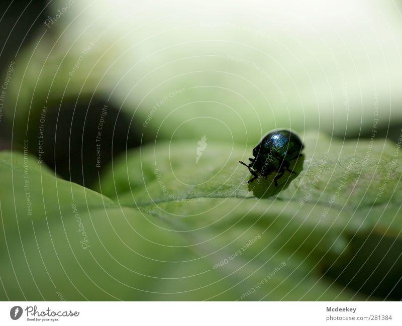 Das große Kabbeln 3 Natur grün weiß Sommer Pflanze Tier Blatt schwarz Wald Erholung Umwelt grau natürlich fliegen Wildtier sitzen