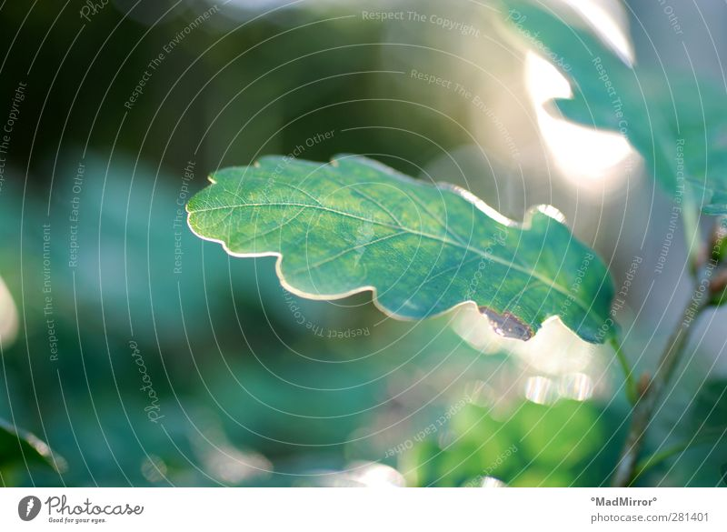 Zweigling Natur grün Sommer Pflanze Baum Blatt ruhig Wald Erholung Klima Zufriedenheit Wachstum Idylle Hoffnung Schutz Lebensfreude