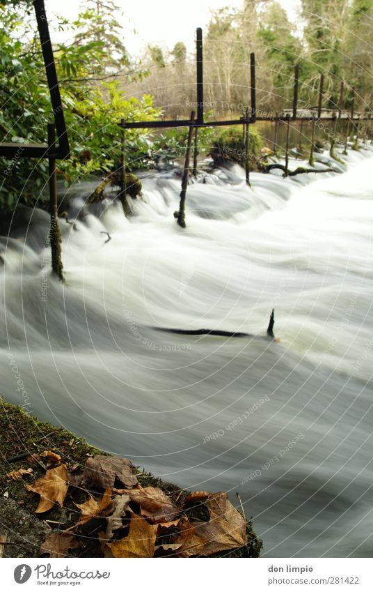 cong river Brücke Umwelt Fluss fließen kaputt Langzeitbelichtung Blatt Herbstlaub Farbfoto Außenaufnahme Experiment Textfreiraum rechts Bewegungsunschärfe