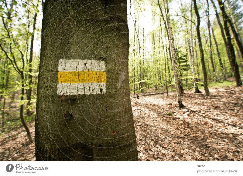Stammesältester Freizeit & Hobby Umwelt Natur Landschaft Sommer Schönes Wetter Baum Wald Zeichen Schilder & Markierungen Streifen dunkel kalt braun grün