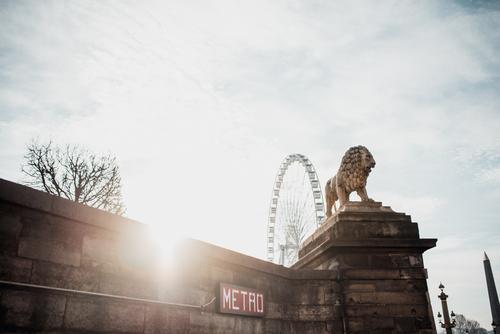 Seitenansicht der Löwenskulptur Statue Architektur Skulptur Paris Franzosen Kunst Stein Frankreich Europa antik schön Skyline Lümmel Stadt lev Kultur Aussicht