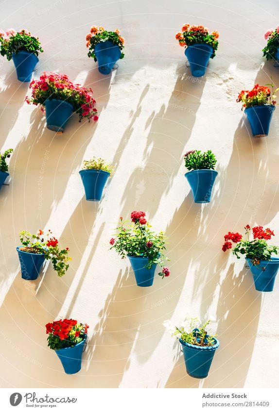 Blumentöpfe und bunte Blume an einer weißen Wand, in Cordoba, Spanien Garten Außenaufnahme Blumentopf grün Ferien & Urlaub & Reisen historisch alt Dorf