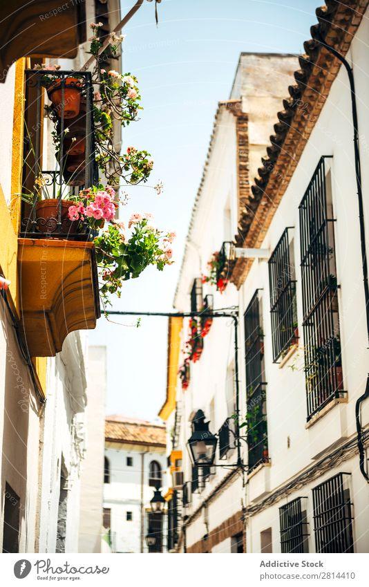 Straße des jüdischen Viertels in Cordoba, Spanien alt laufen Außenaufnahme schmal Stadt Blume