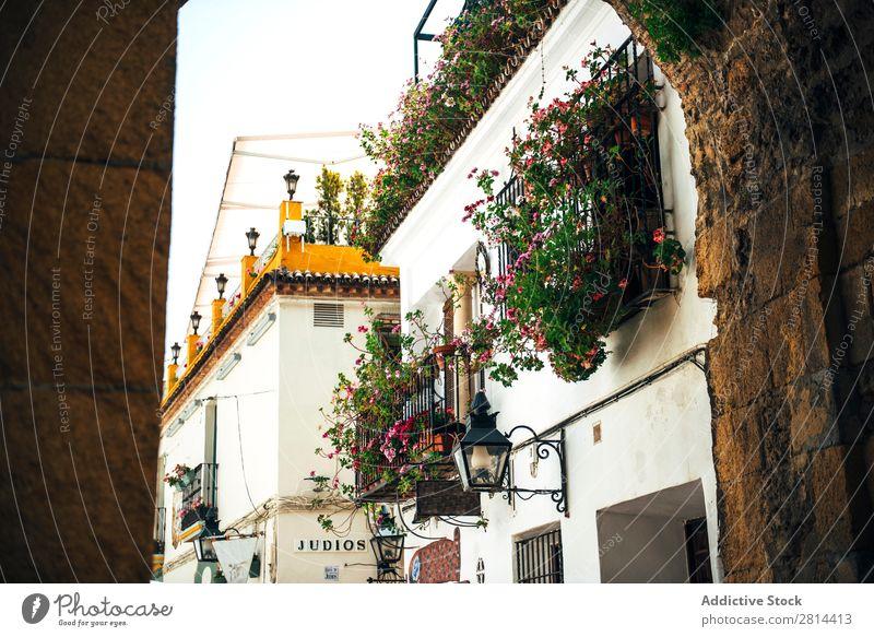 Straße des jüdischen Viertels in Cordoba, Spanien Cordova alt laufen Außenaufnahme schmal historisch Stadt Blume weiß Ferien & Urlaub & Reisen Aussicht Kultur
