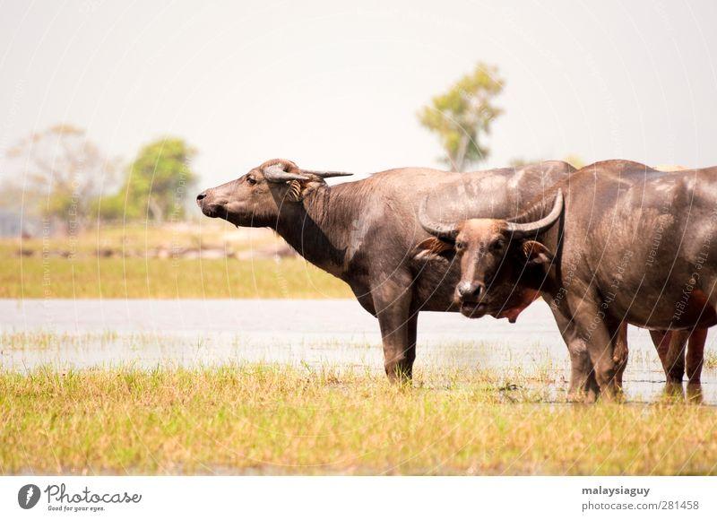 Natur Tier Feld warten Tiergesicht Kuh Nutztier