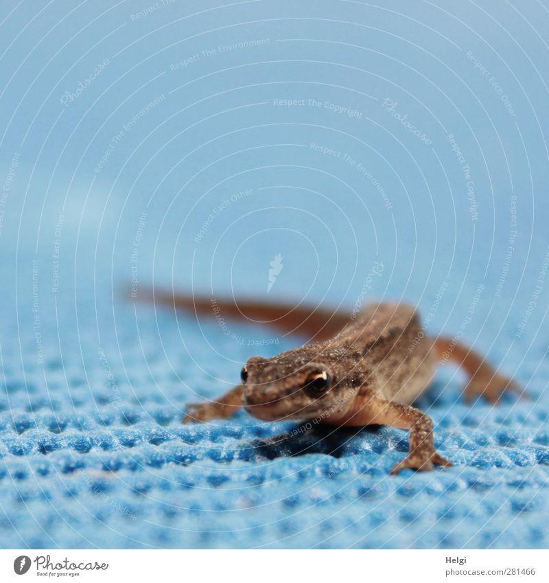 Krumme Dinger | perfekte Körperhaltung... Natur blau Sommer Tier Umwelt Leben klein braun natürlich außergewöhnlich Wildtier warten stehen ästhetisch beobachten