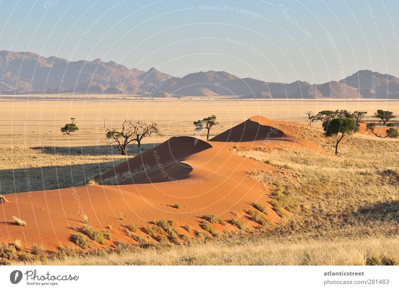 Sanddünen Namibias Natur Landschaft Erde Wolkenloser Himmel Sonnenaufgang Sonnenuntergang Schönes Wetter Wärme Dürre Gras Berge u. Gebirge Wüste