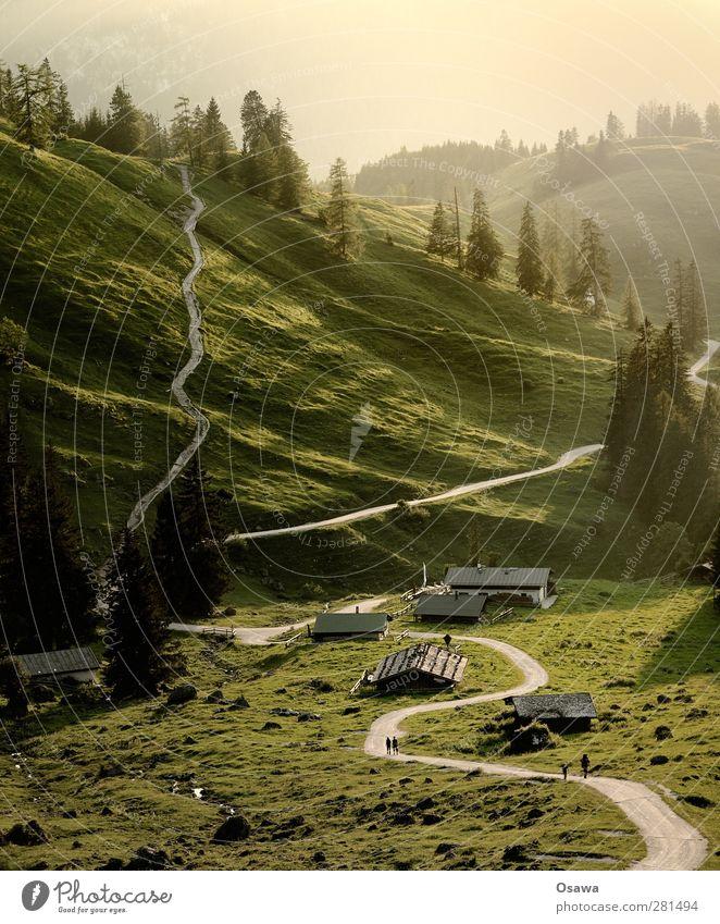 Königsbachalm Natur Baum ruhig Landschaft Berge u. Gebirge Gras Wege & Pfade wandern Alpen Hügel Abenddämmerung Bayern Berghang Alm Wegkreuzung Bergwiese
