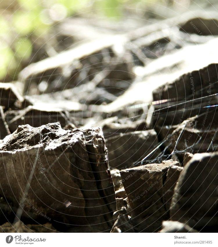 Netzwerk Natur alt grün weiß Pflanze Umwelt Berge u. Gebirge Senior grau Stein natürlich Linie Kraft dreckig authentisch Schönes Wetter