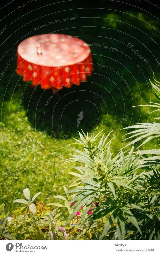 Im Kräutergarten Natur grün schön Sommer rot ruhig Wiese Garten Wachstum authentisch leuchten Idylle rund Anschnitt Tischwäsche Originalität