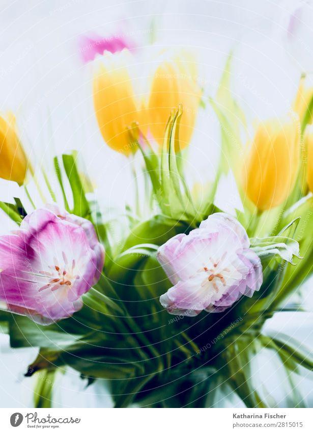 Frühlingsstrauß, Blüten, Blumen Kunst Natur Pflanze Sommer Herbst Winter Tulpe Blatt Blumenstrauß Blühend leuchten Duft schön gelb gold grün violett orange rosa