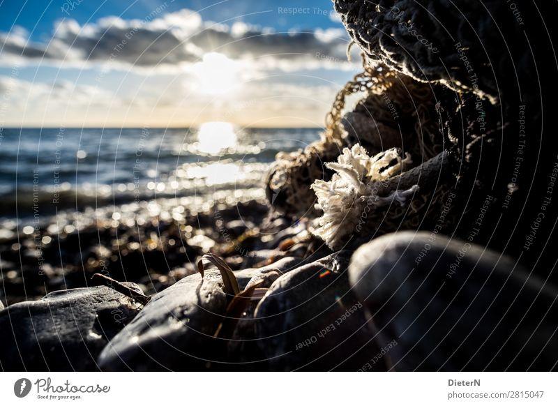 Seilende Umwelt Natur Landschaft Himmel Wolken Sonne Sonnenaufgang Sonnenuntergang Herbst Schönes Wetter Wellen Küste Strand Ostsee blau schwarz weiß Stein Netz