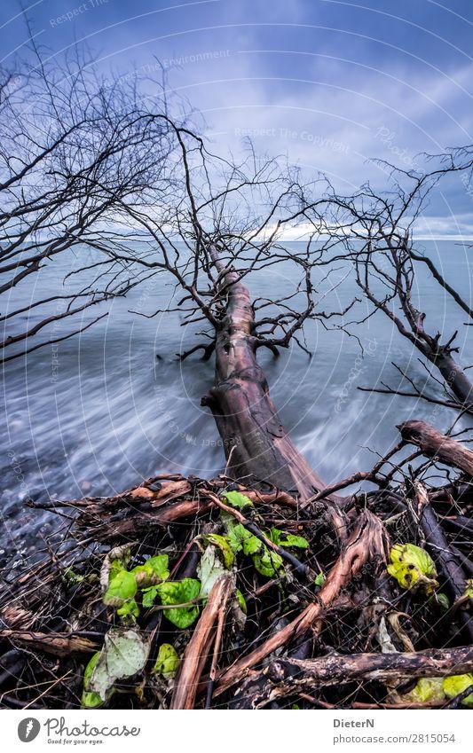 Landnahme Natur Landschaft Himmel Wolken Herbst Wetter Baum Küste Ostsee blau braun grün Baumstamm Horizont Totholz Strand Ast Farbfoto Gedeckte Farben