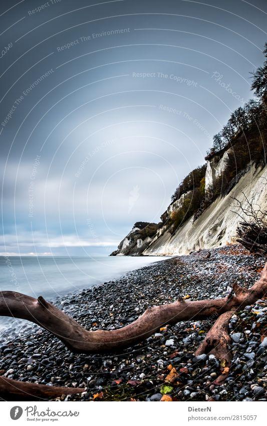 Kreide Natur Landschaft Urelemente Wasser Himmel Wolken Horizont Herbst Baum Küste Strand Ostsee blau braun schwarz weiß Totholz Strandgut Stein Kreidefelsen
