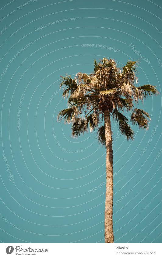 half of miami Ferien & Urlaub & Reisen Tourismus Sommer Sommerurlaub Himmel Wolkenloser Himmel Klima Wetter Schönes Wetter Baum Blatt exotisch Palme Insel Kreta