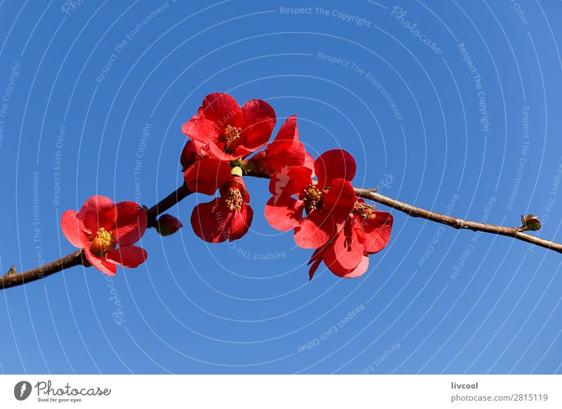 kusa-kobe Lifestyle Glück Leben Sonne Natur Pflanze Urelemente Himmel Frühling Klima Wetter Baum Blume Blüte Garten Park blau rosa weiß Gefühle Liebe