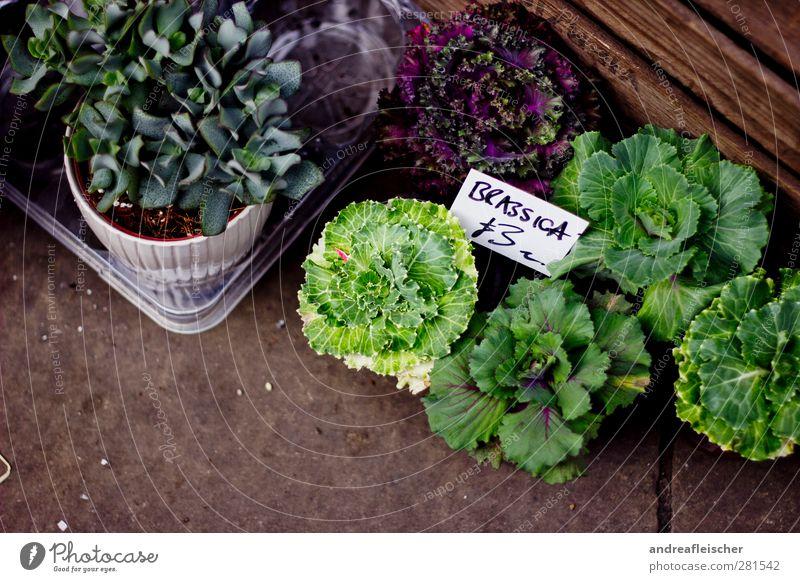 gemüsegarten. Gemüse Salat Salatbeilage Kräuter & Gewürze Pflanze Grünpflanze Nutzpflanze Topfpflanze Stein Holz authentisch frisch schön braun grün