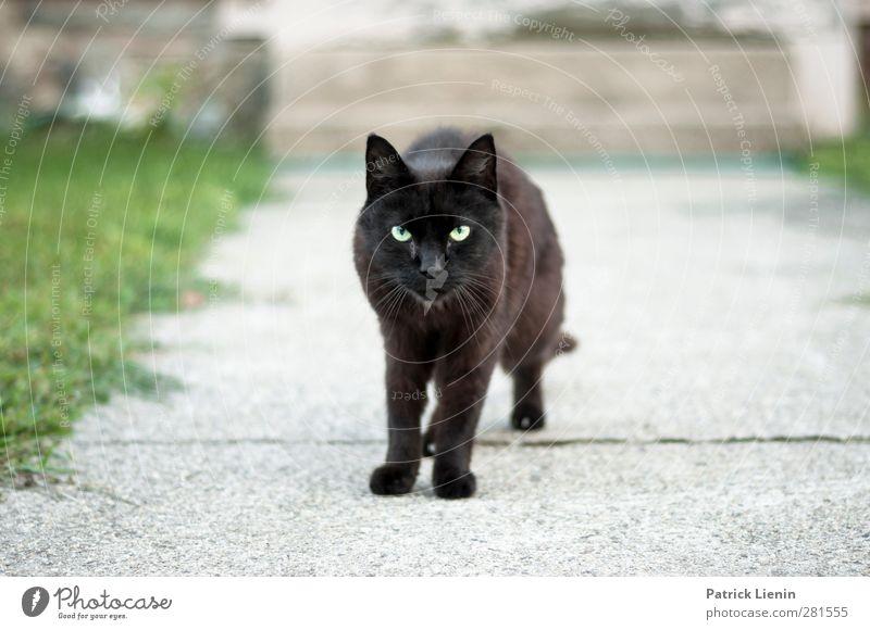 Streuner Katze schön Tier schwarz dunkel Auge Wege & Pfade Stimmung außergewöhnlich Treppe Wildtier wild elegant stehen ästhetisch niedlich