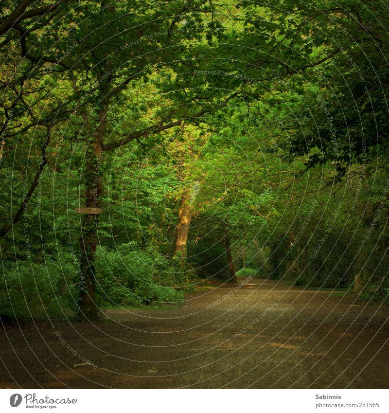 Waldweg Umwelt Natur Erde Schönes Wetter Pflanze Baum Sträucher Baumstamm Baumkrone Wege & Pfade Kies Holz Blatt Fußweg Erholung wandern braun grün ruhig