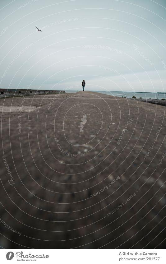 at lengths Mensch Meer Ferne Wand Mauer Horizont maskulin stehen Estland Tallinn