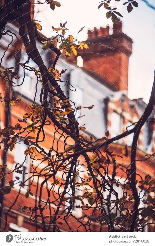 Nahaufnahme Brunch vor dem Hintergrund des Backsteinbaus. Ast Gebäude London Baum Pflanze Herbst Haus Architektur rot flach Wand Großstadt Stadt Außenaufnahme