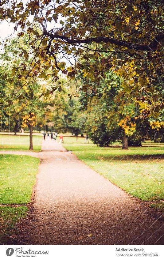 Herbst im Hyde Park, London. Gasse Großstadt Natur Baum England schön Tourismus Attraktion gelb grün mehrfarbig Wege & Pfade Gras Blatt laufen Landschaft
