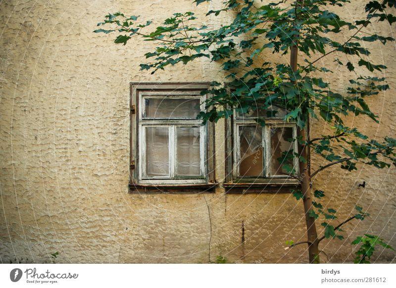 Verminderte Aussichten Sommer Baum Mauer Wand Fassade Fenster alt ästhetisch Wärme Gelassenheit ruhig Armut Idylle Nostalgie Verfall Wandel & Veränderung