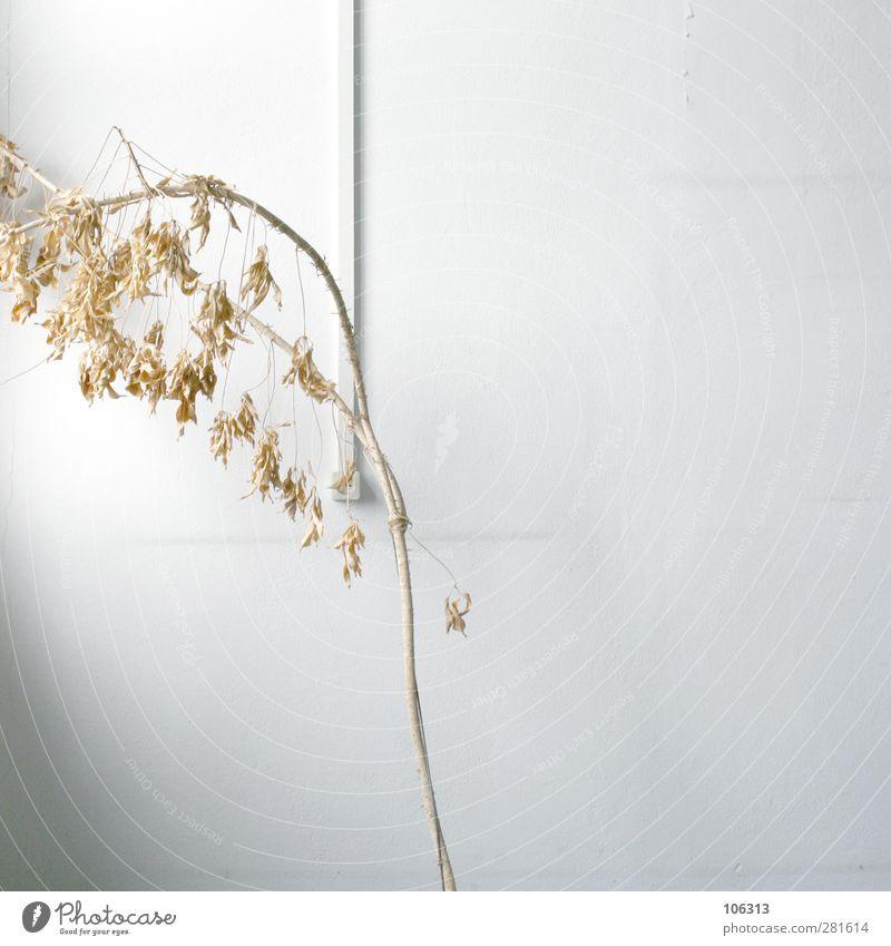 FN241458 Pflanze Tod Büro Uhr Müdigkeit vertrocknet vergangen getrocknet gießen Grünpflanze verstört Zimmerpflanze dehydrieren