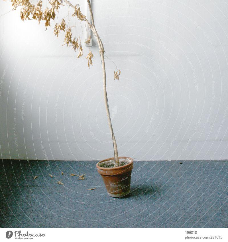 FN241460 Natur blau Pflanze Blatt Tod Büro Wachstum authentisch kaputt trocken verfaulen Umzug (Wohnungswechsel) Krankheit schäbig schließen Blumentopf