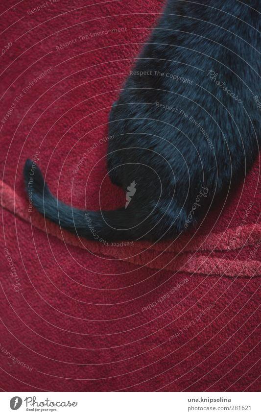 ahoi, herr kater Häusliches Leben Teppich Tier Haustier Katze Fell 1 liegen elegant rund weich rot schwarz Schwanz Farbfoto Gedeckte Farben Innenaufnahme