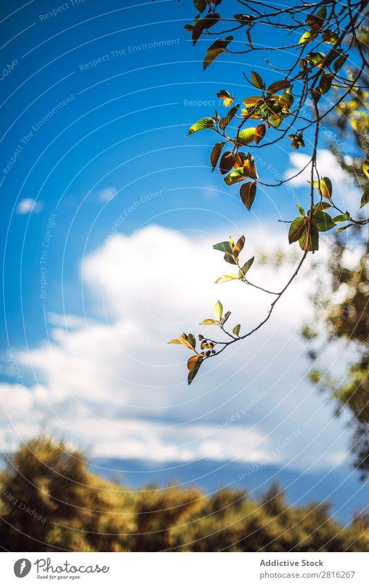 Schöner Talbaum in Huaraz, Peru, Südamerika Abenteuer Anden Hintergrundbild schön blanca blau Wolken Kordilleren Ausflugsziel grün wandern huaraz huascaran See