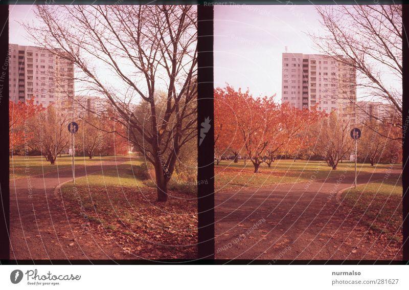 Herbst in der Stadt Lifestyle Mutter Erwachsene Kunst Umwelt Natur Tier Klima Klimawandel Blume Blatt Park Skyline Menschenleer Hochhaus Fußgänger