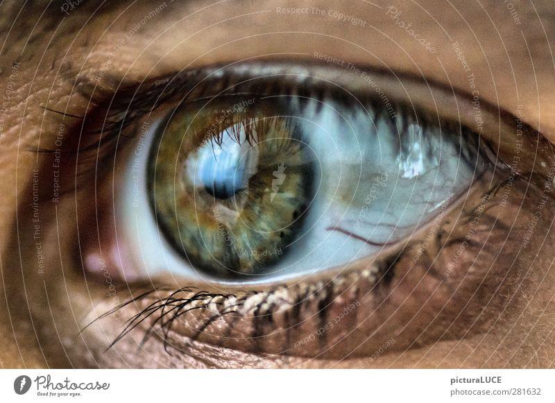Der Blick nach vorn Auge Gefühle Vorfreude Optimismus Sehnsucht Farbfoto Detailaufnahme Makroaufnahme Tag Kontrast Schwache Tiefenschärfe Wegsehen
