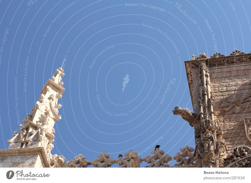 Ganz weit oben Himmel blau Ferien & Urlaub & Reisen weiß schön Sommer Sonne Tier Wand Mauer Stein Vogel Kirche leuchten Schönes Wetter