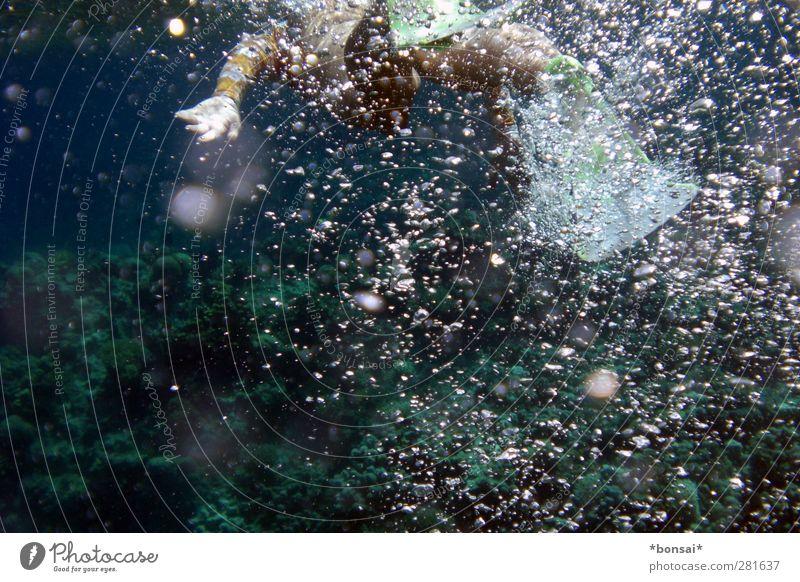 wasserratte Schwimmen & Baden Meer Wassersport tauchen feminin Frau Erwachsene 1 Mensch Rotes Meer atmen Bewegung dunkel Flüssigkeit nass entdecken Leichtigkeit