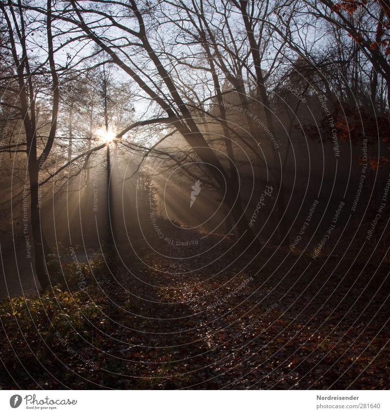 Für André Natur Baum Sonne Landschaft Einsamkeit ruhig dunkel Wald Traurigkeit Herbst natürlich braun Stimmung Wetter Nebel leuchten