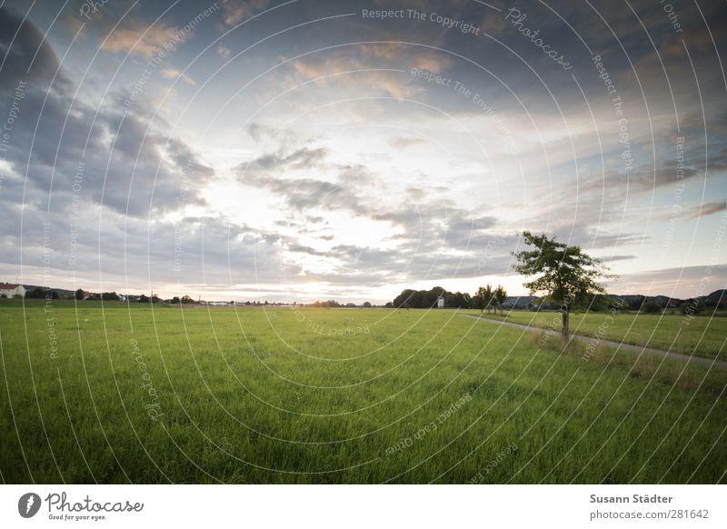 zum licht. Natur Wind Wiese Feld kalt Horizont Abschied Sonne Wolken Baum einzeln Himmel (Jenseits) Sonnenlicht Außenaufnahme Menschenleer Morgen