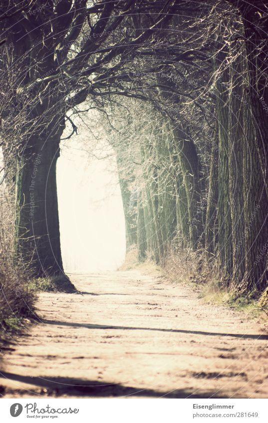 das licht Pflanze Sonnenlicht Baum Allee Wege & Pfade trösten Traurigkeit Tod Lebenslauf Ende Hoffnung Abschied Lichtschein Beerdigung Glaube Vergänglichkeit