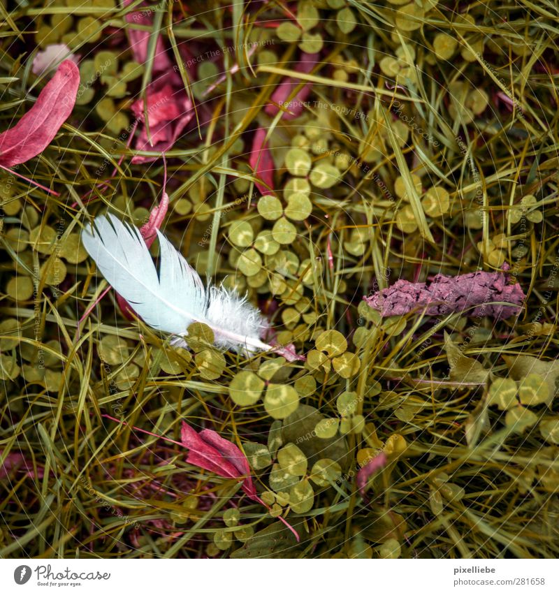 Federn lassen Garten Umwelt Natur Pflanze Herbst Gras Blatt Park Wiese Fährte natürlich grün Klee Kleeblatt Herbstfärbung Herbstlaub Herbstbeginn Farbfoto