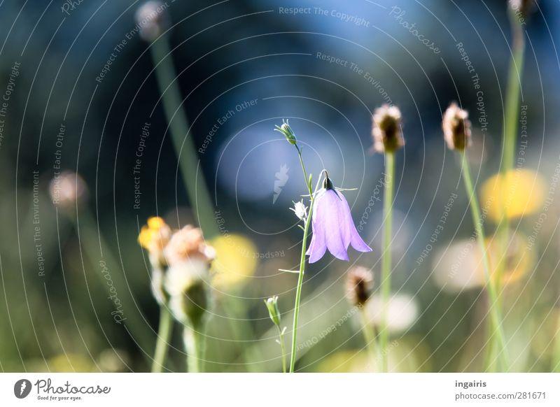 Auf der anderen Seite Natur blau grün Pflanze Blume schwarz gelb Wiese Gras Blüte hell Stimmung Wachstum Trauer Blühend violett