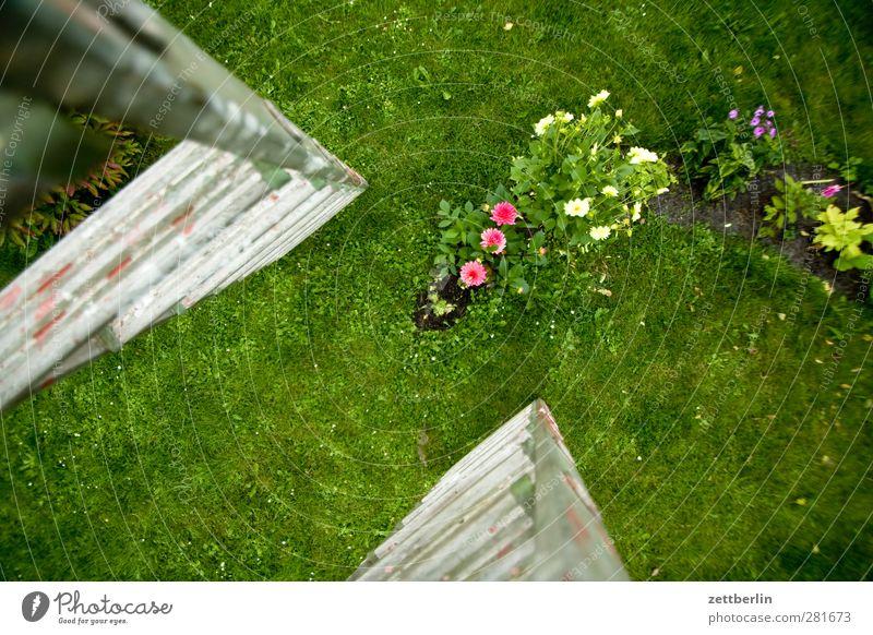 Dahlien Natur Ferien & Urlaub & Reisen schön Sommer Blume Landschaft Umwelt Wiese Gras Blüte Garten Park Wetter Klima Freizeit & Hobby Todesangst