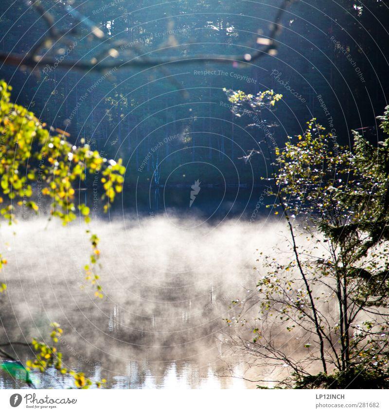 Träumen auf Schwedisch Angeln Sommer Sommerurlaub Natur Landschaft Tier Wasser Sonnenlicht Schönes Wetter Wald Seeufer Flussufer Schweden Schwimmen & Baden