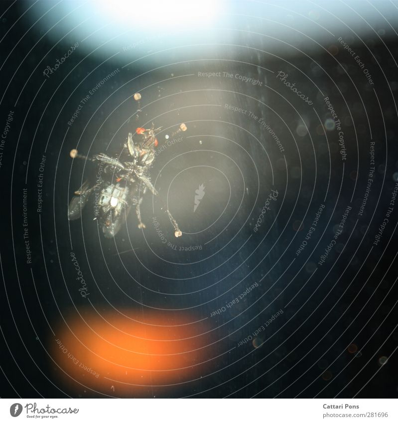 Sie beobachten uns... Tier schwarz dunkel klein orange Glas Wildtier wild Fliege warten leuchten festhalten nah Insekt hängen