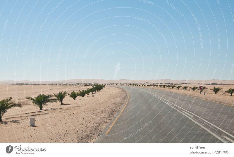 Hinter dem Horizont Umwelt Natur Landschaft Wärme Dürre Wüste trocken Straße nirgendwo Wege & Pfade Ferne Palme Namib Namibia Unendlichkeit flach