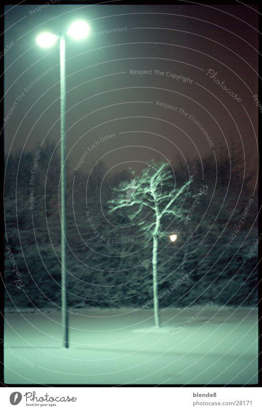 PflanzLicht Baum Winter Schnee Laterne Neonlicht Leuchtstoff