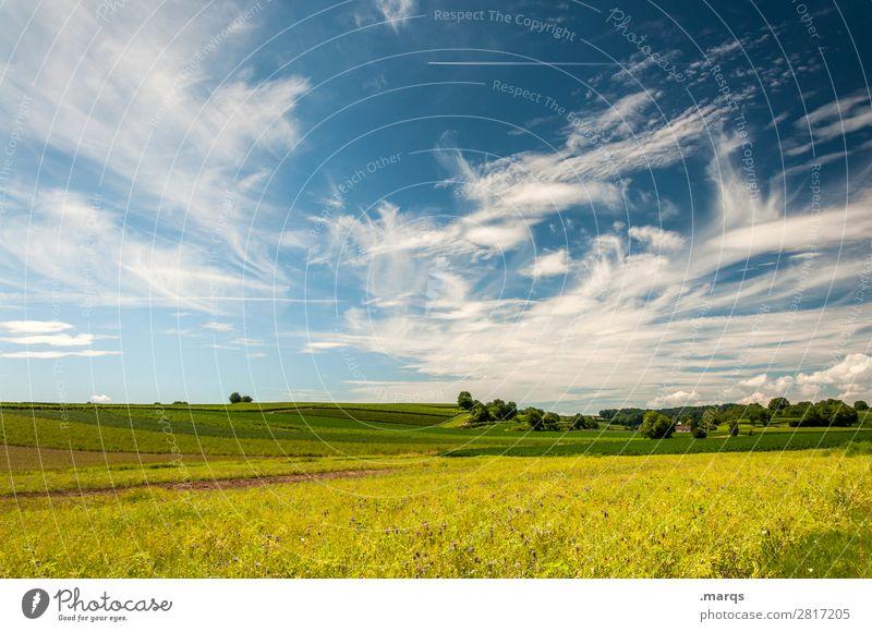 Kaiserstuhl Umwelt Natur Landschaft Himmel Wolken Sommer Schönes Wetter Baum Wiese Erholung gelb grün Ausflug Tourismus Farbfoto Außenaufnahme Menschenleer