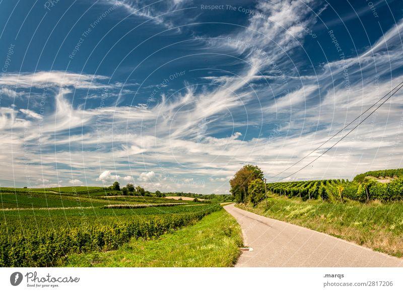 Kaiserstuhl Tourismus Ausflug Sommer Natur Landschaft Himmel Wolken Schönes Wetter Baum Feld Wein Wege & Pfade Ziel Zukunft Farbfoto Außenaufnahme Menschenleer