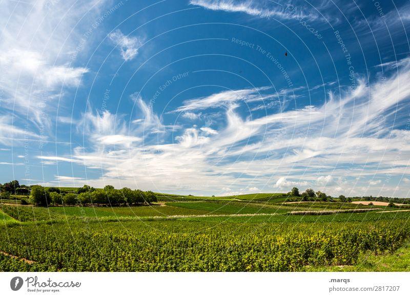 Kaiserstuhl Landwirtschaft Forstwirtschaft Himmel Wolken Sommer Schönes Wetter Pflanze Feld Erholung Farbfoto Außenaufnahme Menschenleer Textfreiraum oben