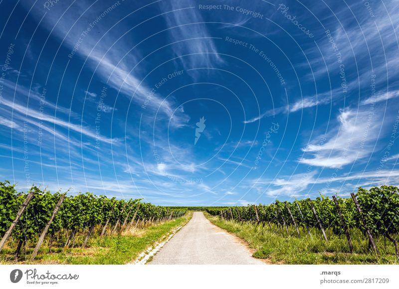 Kaiserstuhl Natur Landschaft Himmel Wolken Sommer Schönes Wetter Nutzpflanze Wein Weinbau Straße Erholung Ziel Zukunft Farbfoto Außenaufnahme Textfreiraum oben